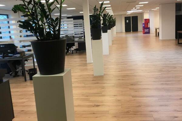Witte_sokkels_plant_kantoor